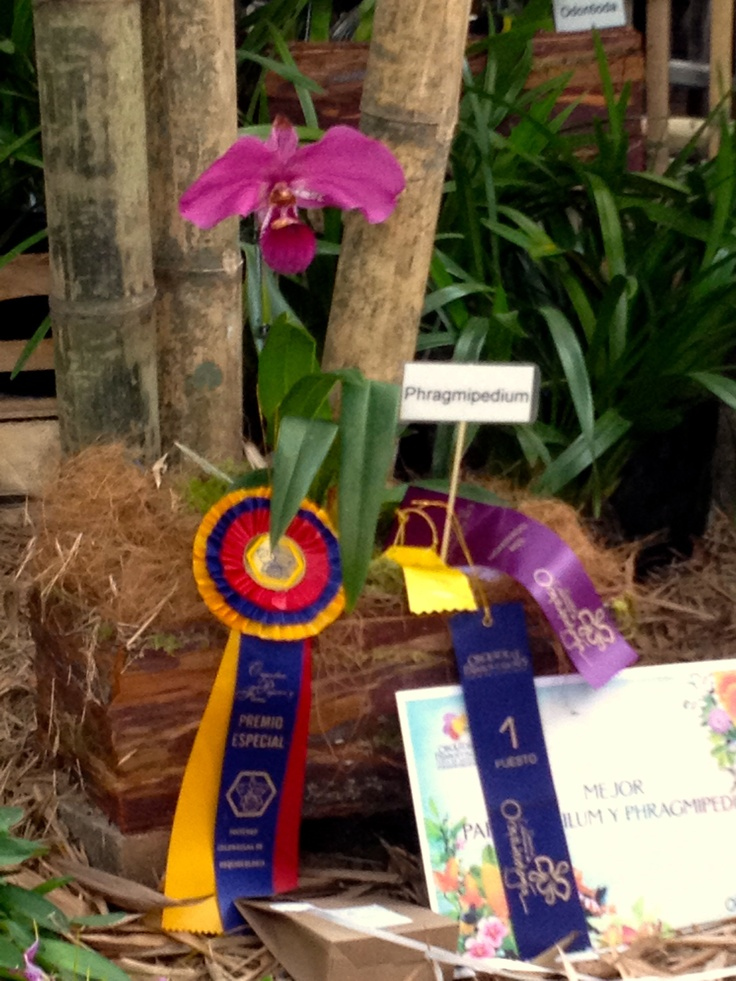 La reina de la exposición es la Orquídea, considerada la flor nacional y una de las especies florales más hermosas del mundo.