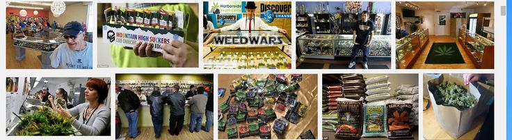 Weed Seeds Store USA | Best Weeds Seed Store Near You!