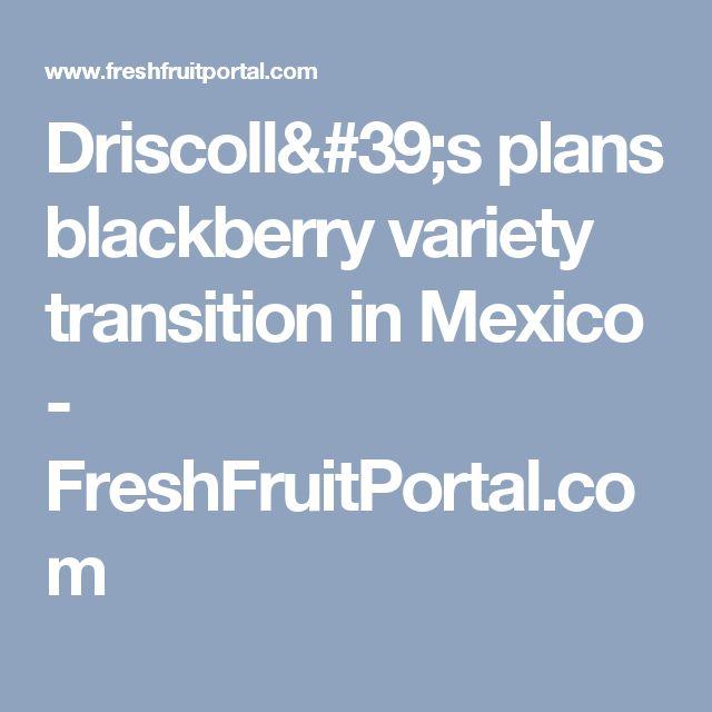 Driscoll's plans blackberry variety transition in Mexico - FreshFruitPortal.com