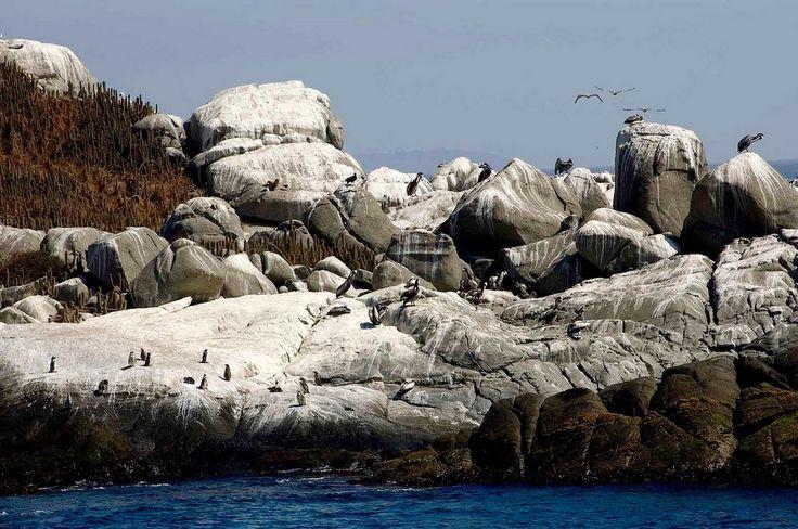 Pinguin island, Chile