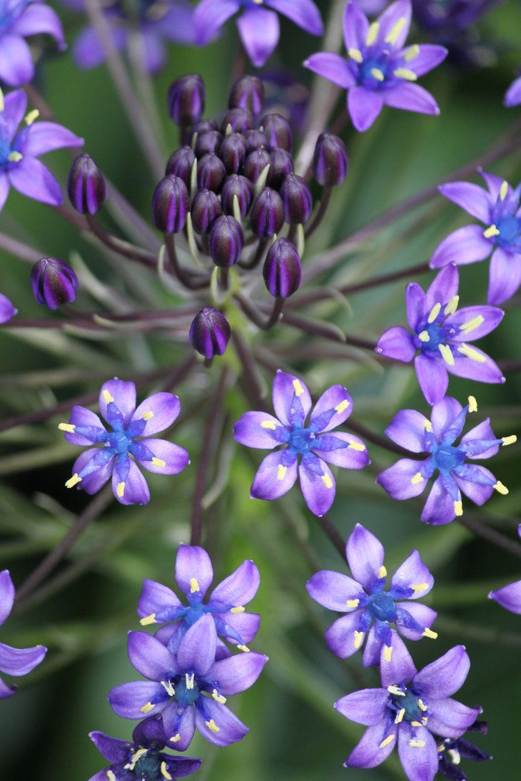 585 best flowers images on pinterest flowers plants and
