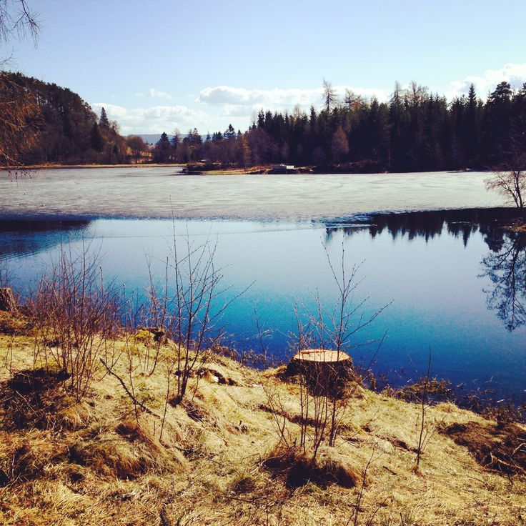 ✲ the spring is just around the corner!  / Teisendammen / Bymarka / Trondheim