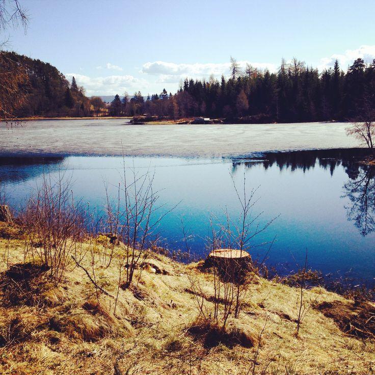 ✲ the spring is just around the corner!  / Teisendammen / Bymarka / Trondheim