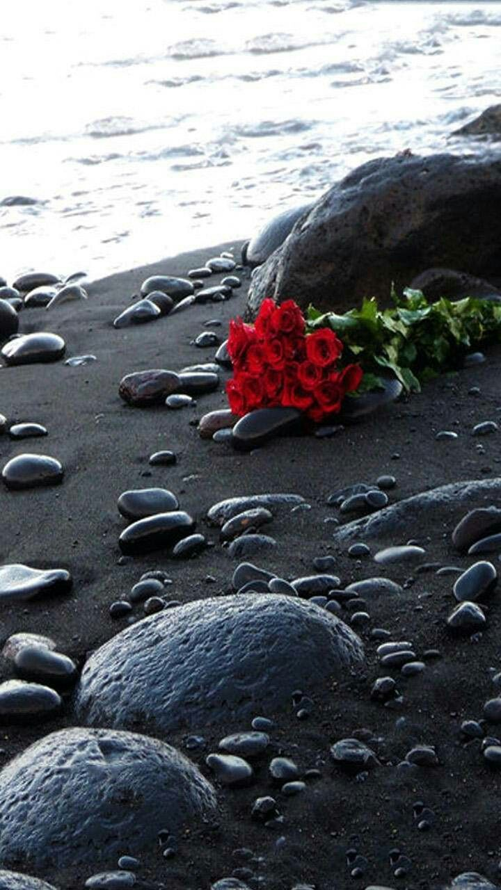 Sfondi mare con fiori