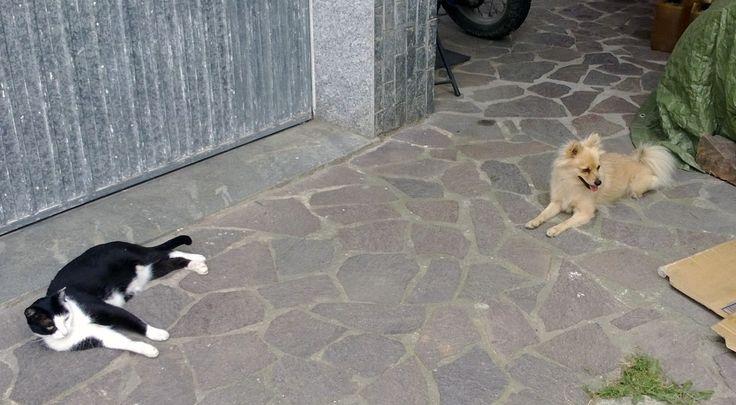 Miu' e la sua amica Sophie