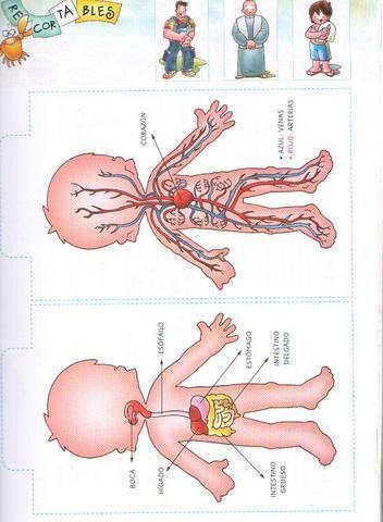 fichas infantiles del cuerpo humano para imprimir gratis para niños