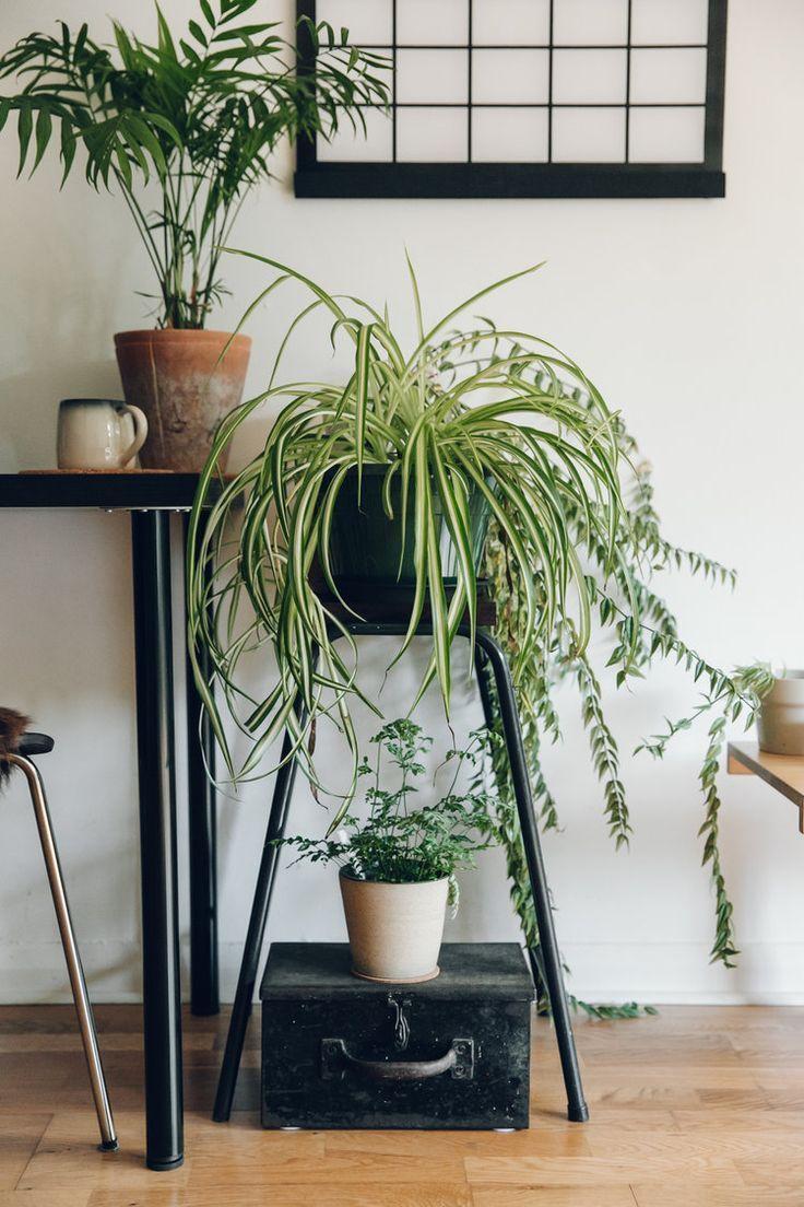 1000 ideas about indoor plant decor on pinterest plant. Black Bedroom Furniture Sets. Home Design Ideas