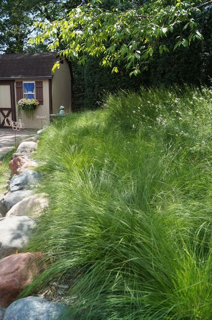 """Prairie dropseed (Sporobolus heterolepis) is an adaptable warm-season bunchgrass that is extremely drought tolerant and loves hot, dry soil. A host plant to several skipper butterfly species, and songbirds love to eat its seeds. Zones 3-8; full sun, 12-18"""" tall foliage; 2-3'tall when in bloom; about 2' wide, blooms are highly fragrant; stunning fall color; won't self-seed and spread. Native from CO to OK and AR, and north to MI, IN, WI, MN and ND; pockets in eastern Midwest and Northeast."""