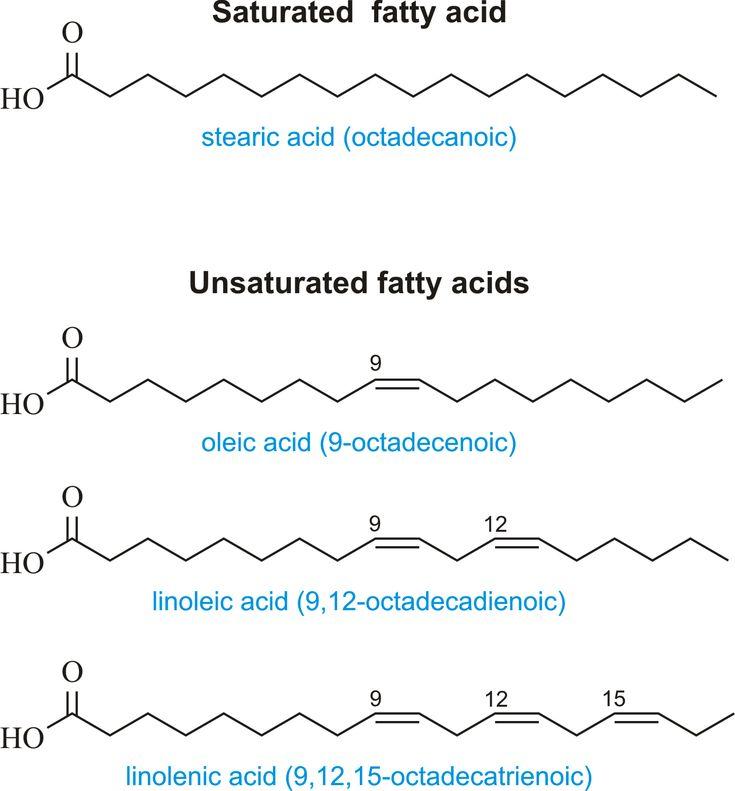fatty acids biochemistry pinterest chemistry