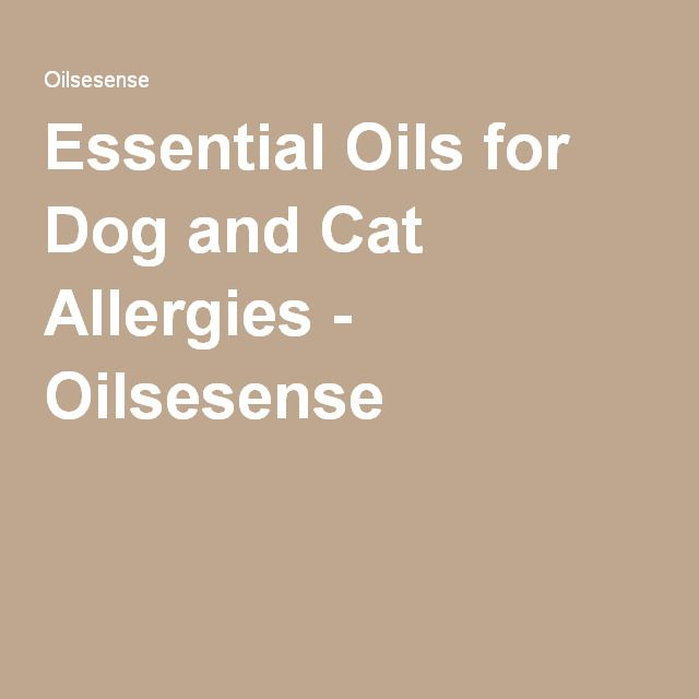 Essential Oils for Dog and Cat Allergies - Oilsesense