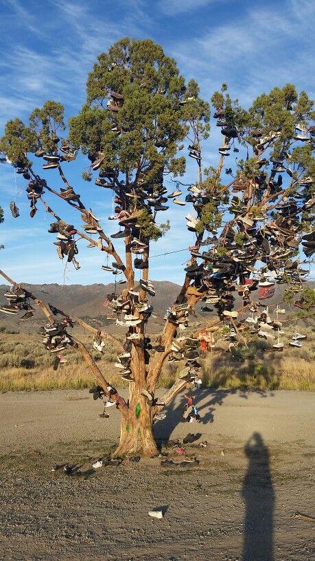 Shoe tree. Fallon nevada