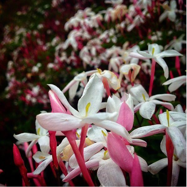 """Respire , inspire fundo o mundo . Sinta o perfume das palavras , à em flores .Chuva subindo para renovar descendo ,consigo ao pé das nuvens caminhe , inspire , respire e sobre o mundo flutuar ! ... #maybetomorrow  """"seu todo ele é """""""