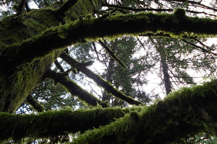 view through a tree. Molalla/Scotts Mills Oregon
