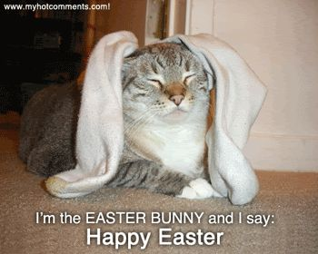 Easter cat wishes you a Happy Easter!  ❤ Upload you cat pictures at www.showmecats.com ❤ #showmecats #thefunny #FunnyCats