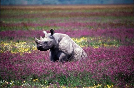 Please sign the petition to help save the rhino from extinction: http://www.avaaz.org/en/save_rhinos/?tta