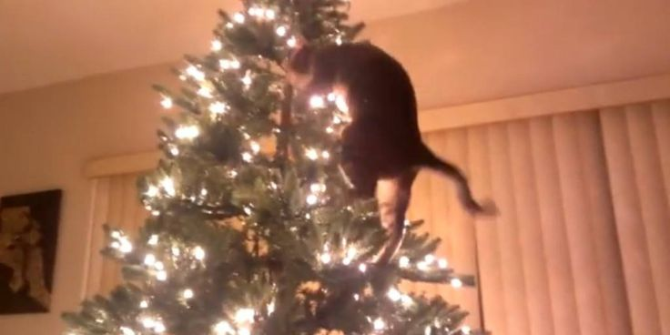 Run To The Hills. A Hilarious Compilation Of The Constant Battle Between Cats & Christmas Trees • Page 3 of 5 • BoredBug