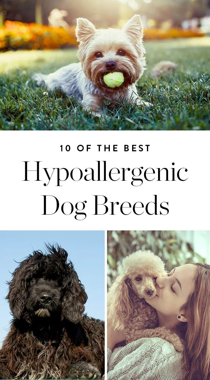 best animals images on pinterest pets dog care and helping dogs