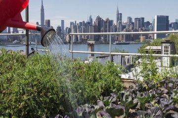 A New York la rivoluzione dell'agricoltura urbana