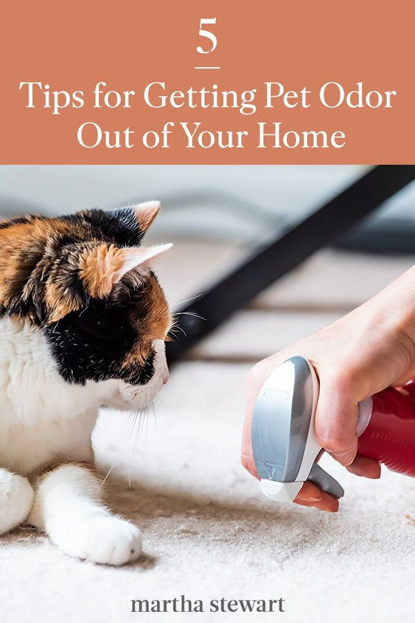 Five Tips For Getting Pet Odor Out Of Your Home And Belongings In 2020 Pet Odors Pet Smell Pet Urine Smell