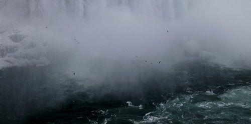 Birds of the Mist niagara falls brentdsilva.com