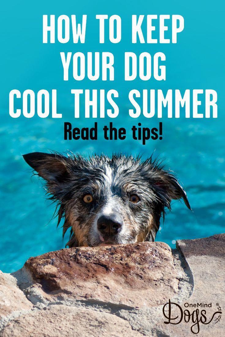 Tips For Choosing Healthy Dog Treats Dog Training Dog Training
