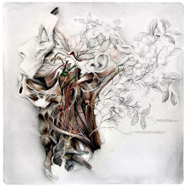 nunzio paci: Still life with silk camellias / Natura morta con camelie di seta