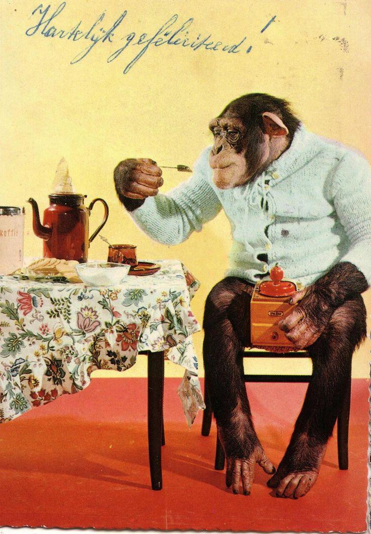 Женщина и обезьяна открытка, принцессой рапунцель картинки