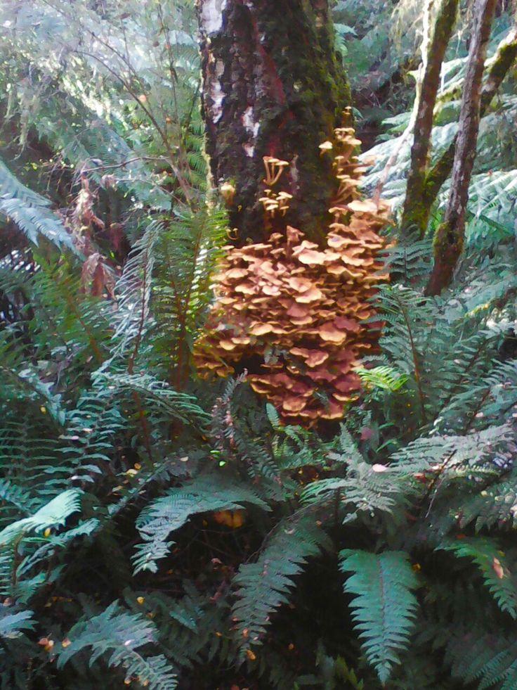 Fungi Lilydale falls