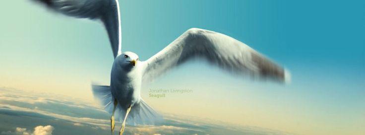 Jonathan livingstone seagull facebook cover