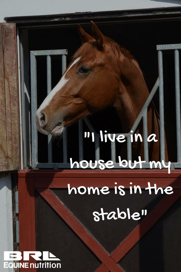 """""""I live in the house but my home is in the stable"""" equestrian quote  Who else feels this way? I would live in the barn too if I could! #barnapartment  #BRLequine #barnrat #loveyourhorse"""