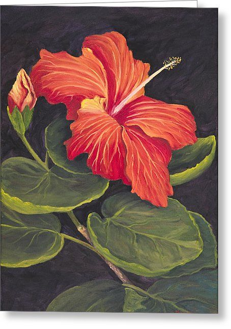 Red Hibiscus Greeting Card by Darice Machel McGuire
