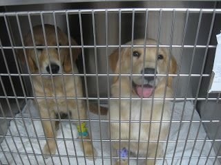 www.perfectpetowners.com: Making your pet's trip to the veterinarian a Fear ...