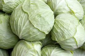 Image result for bắp cải