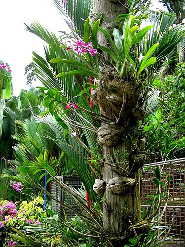 134 best images about orchids on pinterest silk plants - Flowers that grow on tree trunks ...