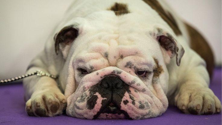 La razón por la que hay tantas razas de perros en el planeta - 29.03.2017 - LA NACION
