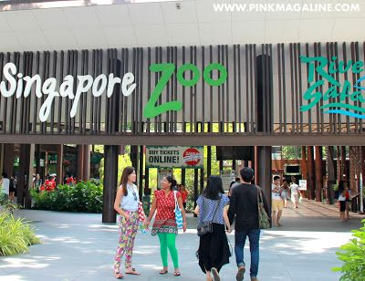 Pink MagaLine: Singapore Zoo: Another Reason to Go Back to Singap...