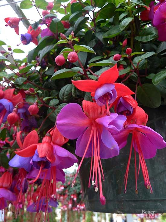 Spruce up that shady spot in your yard by planting a few of these shade flowers. You can have a low-maintenance flower bed with flowers that require no sun! Plant your favorites including bleeding heart and fuschia.