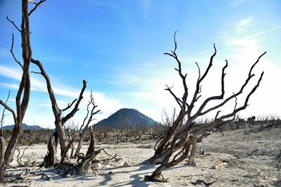 PERGIPEDIA  - Keindahan Di Balik Keangkeran Hutan Mati Gunung Papandayan Garut . Sesuai dengan na...