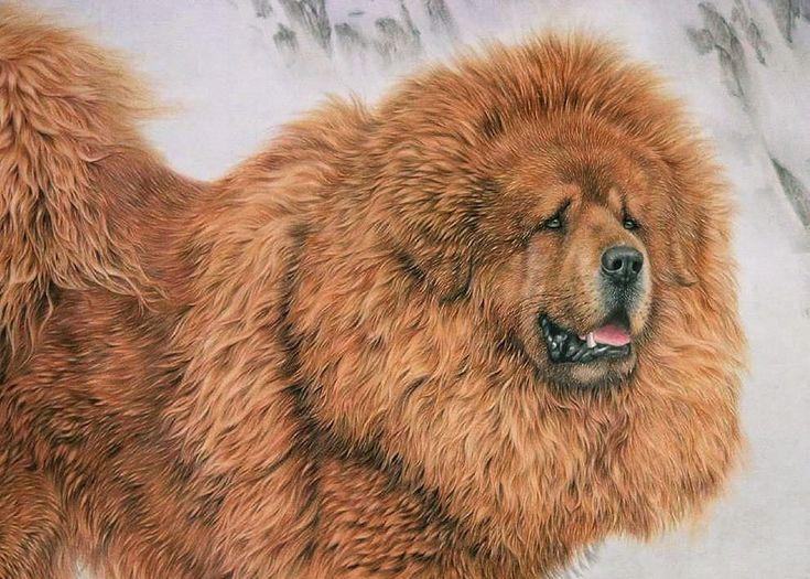 sobaka_ru: Тибетские мастифы. Арт