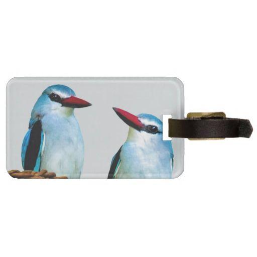 Woodland Kingfisher birds