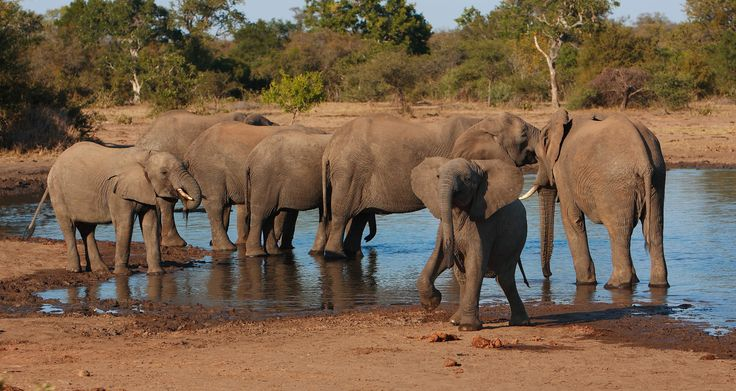 #2 WILDLIFE: South Africa has a selection of superb game parks and private reserves. #Travel #SouthAfrica