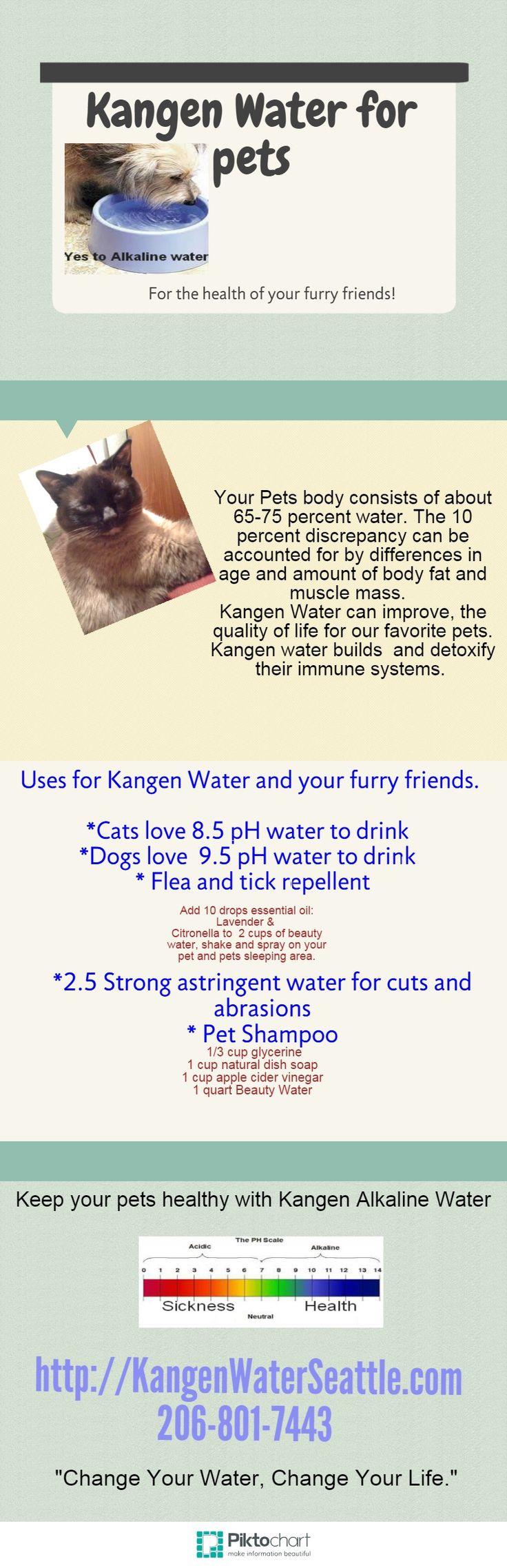 Kangen Water for pets Copy Copy | @Piktochart Infographic