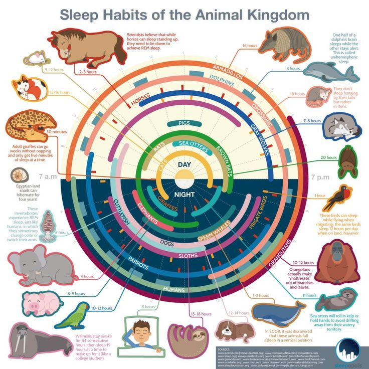 Do all animals sleep? When does a dolphin have a chance to take a nap? Does a horse need to lie down to get some shut-eye? Do opossums and bats really sleep upside-down?