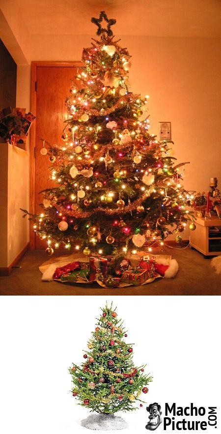 Christmas trees uk - 3 PHOTO!
