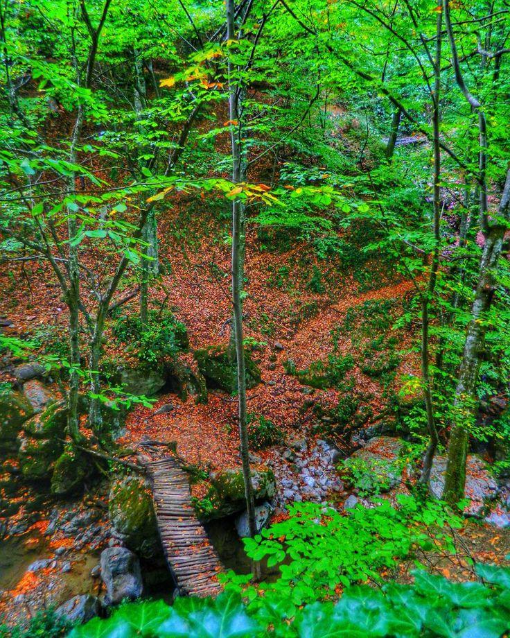 """63 Beğenme, 1 Yorum - Instagram'da Ü z e y i r  K a y a (@turkcuzeyir): """"#nature #natural #naturelovers #trees #trekking #turkey #bursa #inegöl #oylat"""""""