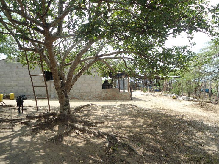 Somos un grupo de campesinos dueños de parcelas del sector las palmitas y Miraflores que están ubicadas en los limites entre el municipio de Baranoa y Usiacurí. Estamos asociados bajo la denominación o razón social Asociación Campesina Agraria Las Palmitas - Miraflores  ACAPALMIR. Con NIT: 900.742.343-1. Con domicilio principal en Baranoa.