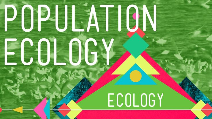 Population Ecology: The Texas Mosquito Mystery - Ecology #2