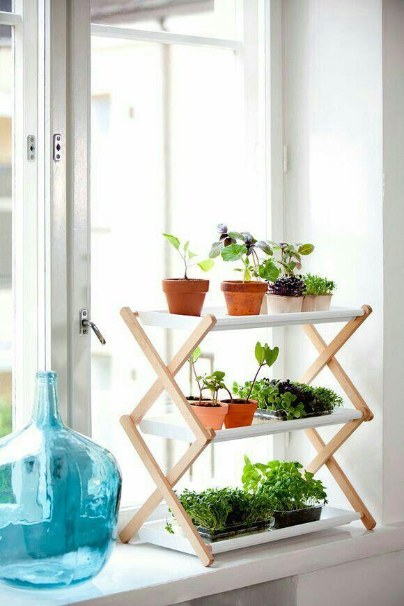Plantinhas na janela | Morning apartment view