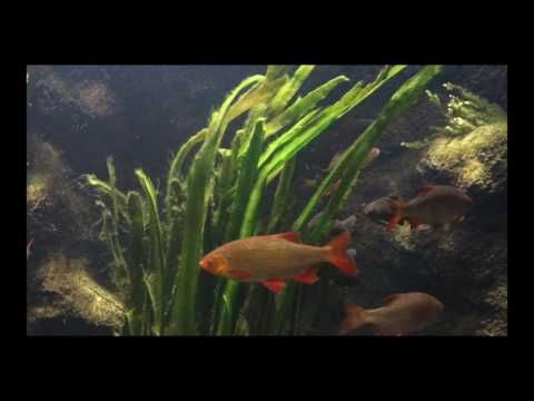 contemplation research - fish