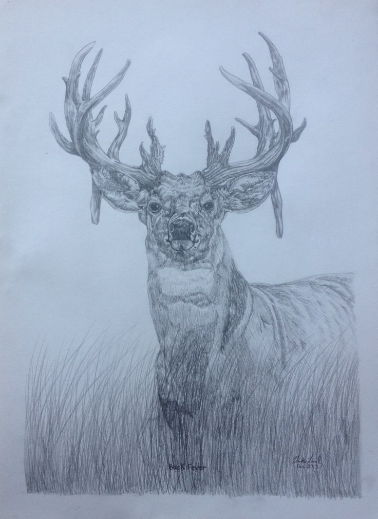 """Buck Fever"" Pencil art by Vicki Lind"